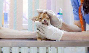 ветеринарная клиническая диагностика