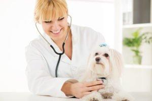 диагностика заболеваний у животных
